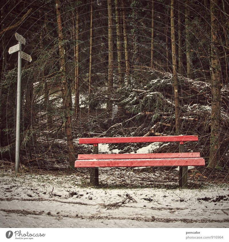 do you know where? Elements Earth Winter Snow Tree Forest Sign Hiking Cold Loneliness Future Bench Red Road marking Spruce forest Orientation Colour photo