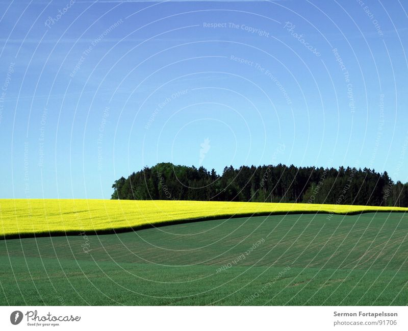 raps_mai_1 Field Canola Spring May Horizon Physics Far-off places Large Meadow Plant Agriculture Green Yellow Sky Blue Crazy Warmth Calm Americas Landscape