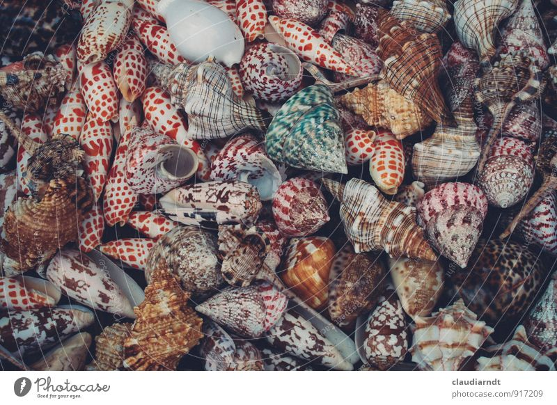 vacancy Animal Snail Mussel Many Multicoloured Snail shell Mussel shell Collection Marine animal Seafood Souvenir Colour photo Detail Deserted Day Long shot