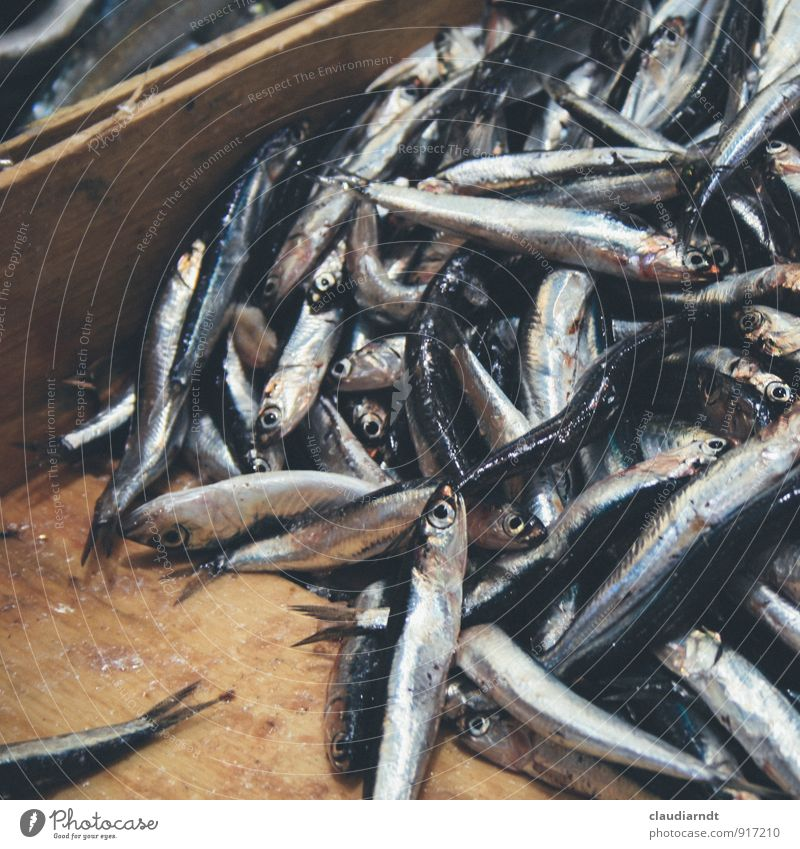 Mercato Oriental Fish anchovies anchovy Herring Dead animal Fresh Many Silver Market stall Farmer's market Fish market Crate Wooden box Food Food photograph