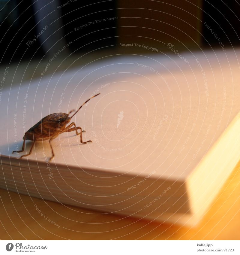 Animal Emotions Book Insect Beetle Feeler Crawl Block Blind Bow Writer Scratch Pests Media Ogre Isopod