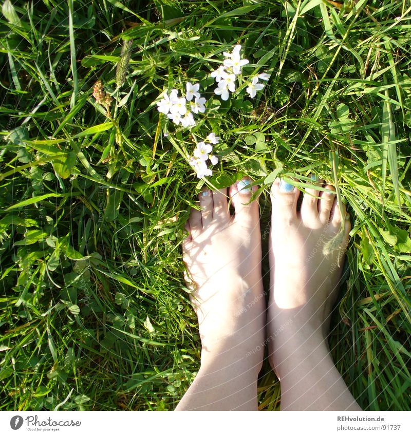 Woman Blue White Green Sun Summer Flower Meadow Grass Spring Blossom Legs Feet Skin Fresh Stand