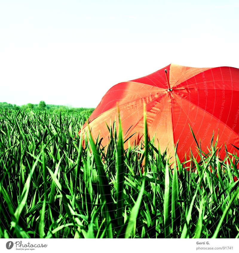 fooled Charming Sunshade Protective equipment Umbrella Red Summer Field Cornfield Fresh Multicoloured Greeny-red Agriculture Wind Blade of grass Movement