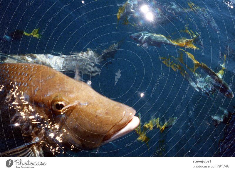 Water Ocean Lake Fish Dive Fishing (Angle) Australia Feeding Reef Queensland Whitsunday Islands