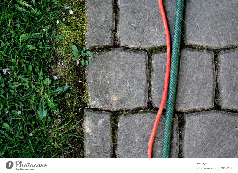 structure Meadow Grass Dandelion Pave Hose Bend Connect Graphic Furrow Division Communicate Floor covering Garden Cobblestones Stone Cable Column Meandering