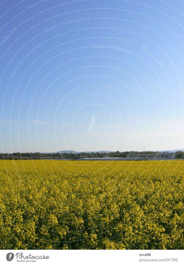 yeah, that's a rapsfeld too is a rapsfeld... Canola Canola field Yellow Blossom Field Summer Environment Spring Stalk Horizon Blue gradation May Physics