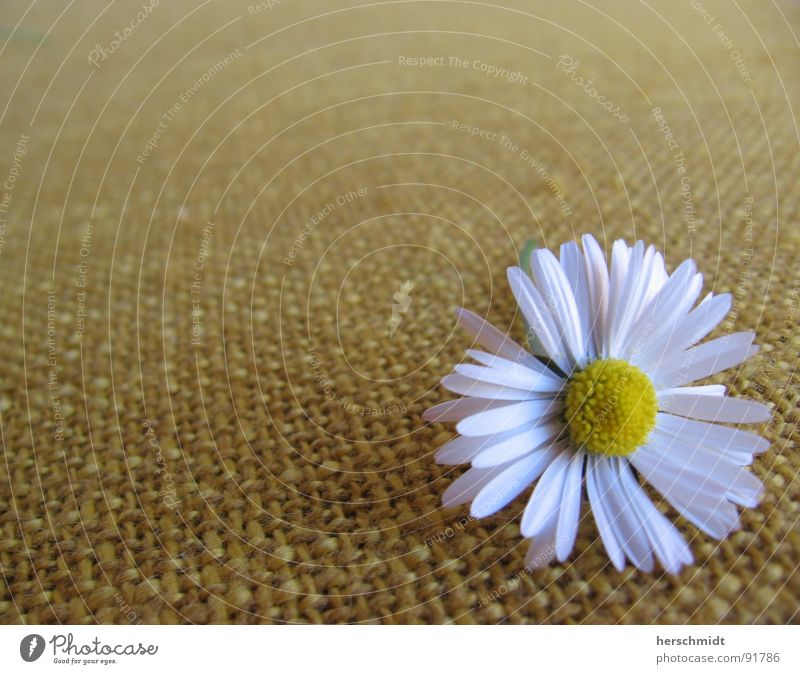 White Flower Green Plant Calm Loneliness Yellow Far-off places Relaxation Lie Cloth Daisy Seating Comforting
