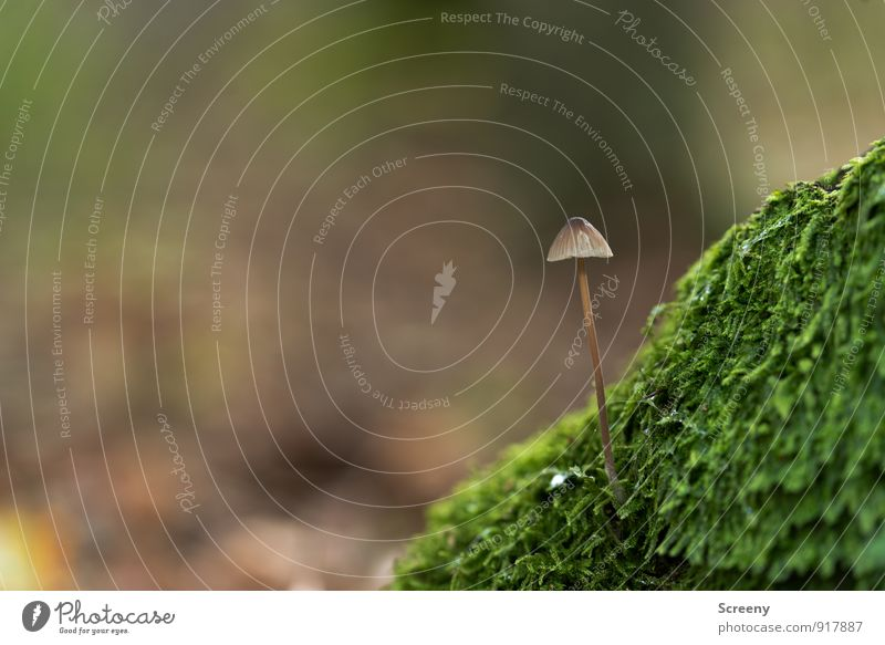 Mountain... Nature Plant Autumn Moss Mushroom Mushroom cap Forest Growth Small Wild Brown Green Optimism Serene Patient Calm Contentment Idyll Power Delicate