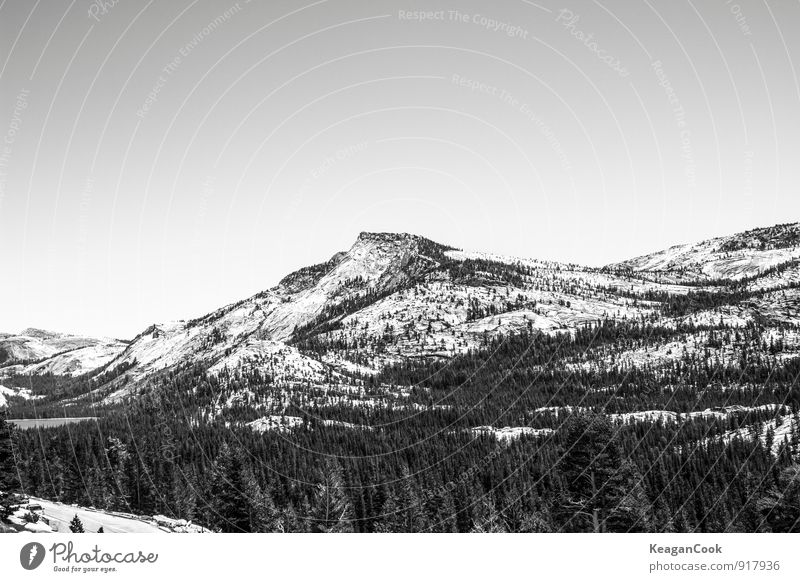 Yosemite Environment Nature Landscape Earth Sky Cloudless sky Horizon Winter Climate Weather Beautiful weather Ice Frost Snow Snowfall Tree Forest Rock Mountain