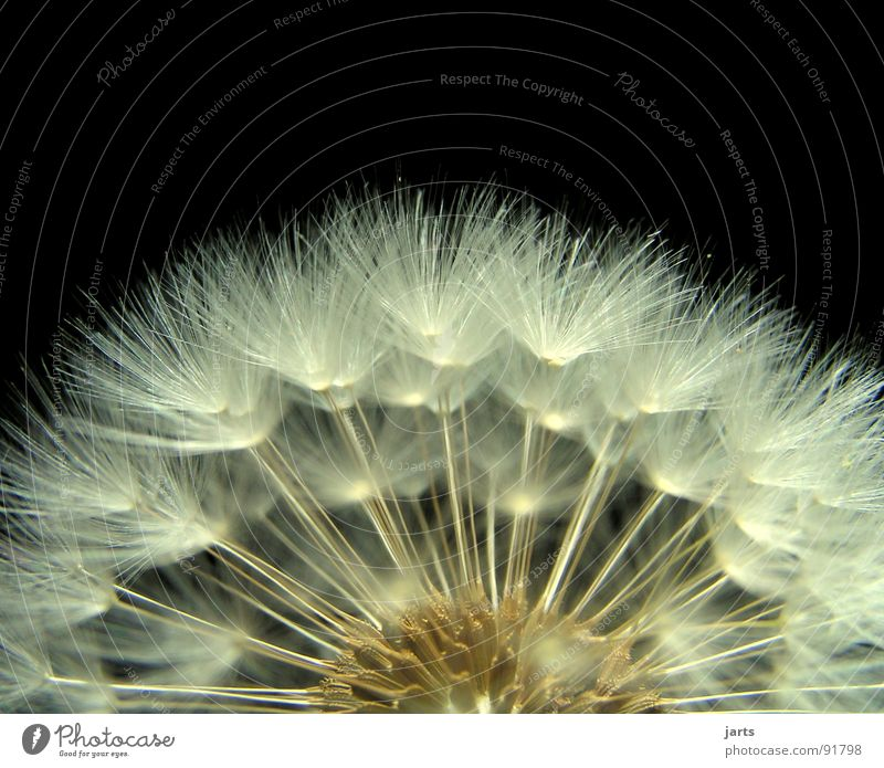 Beautiful Summer Meadow Blossom Spring Flying Dandelion Easy Hover Fine