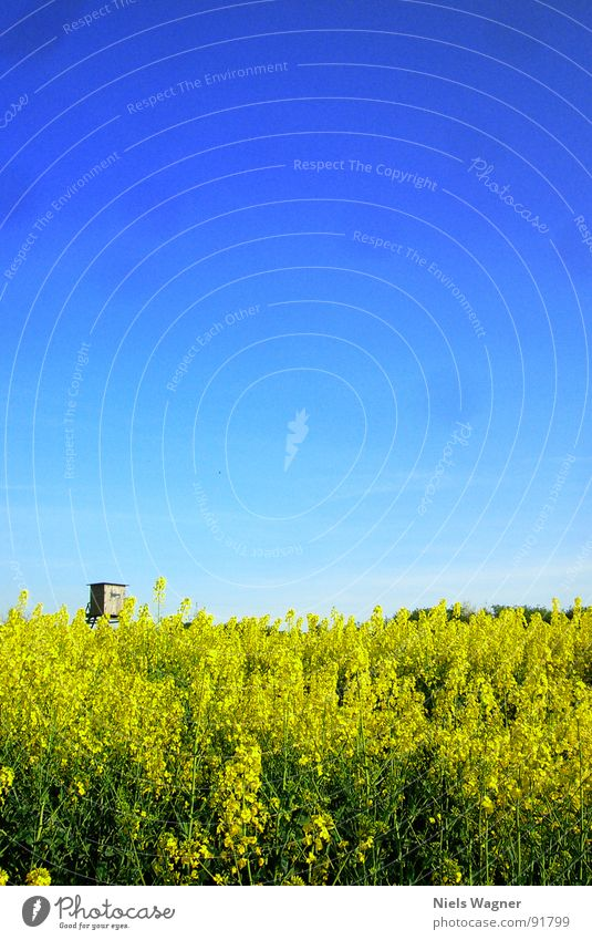 Sky Blue Green Summer Yellow Meadow Warmth Wood Blossom Field Leisure and hobbies Floor covering Physics Canola Hunter Progress