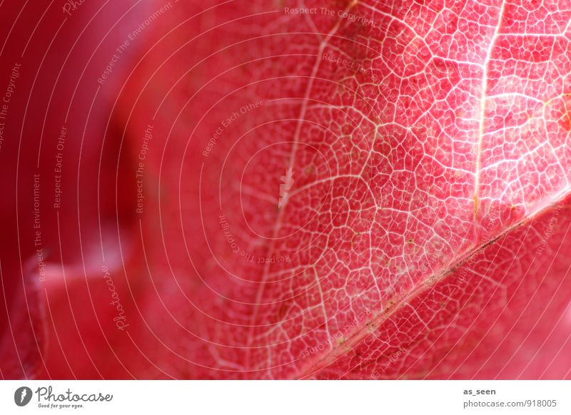 Nature Plant Beautiful Colour Red Leaf Calm Environment Autumn Natural Illuminate Transport Climate Esthetic Point Transience