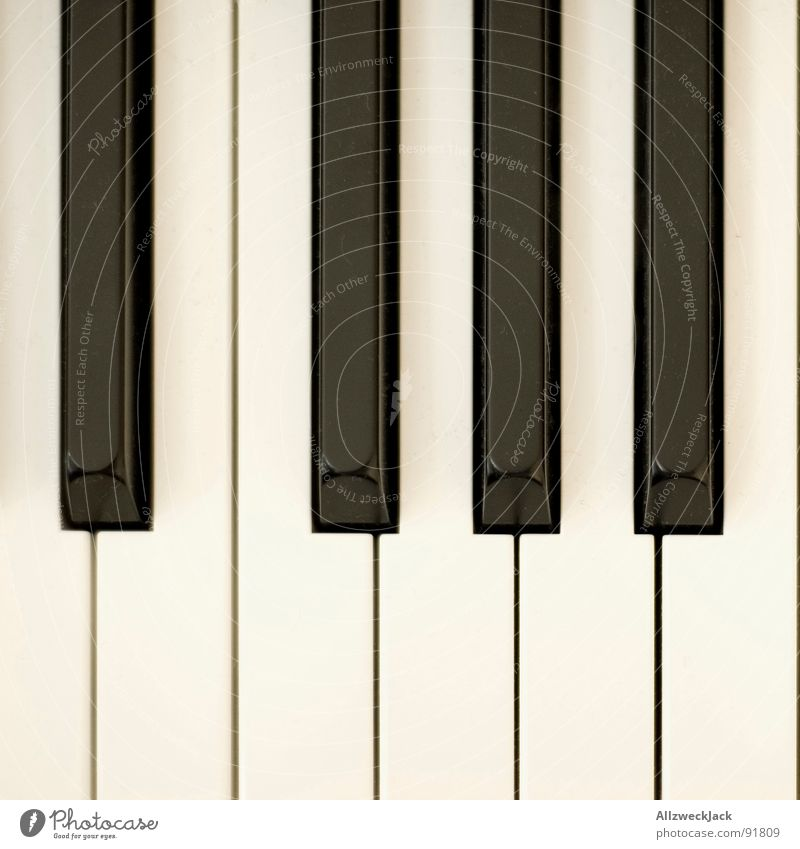 White Black Playing Music Contentment Art Wing Touch Concert Dynamics Piano Musical notes Arts and crafts  Musical instrument Animal Listening