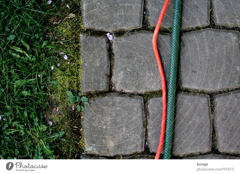 Meadow Grass Garden Stone Communicate Cable Floor covering Dandelion Division Cobblestones Furrow Hose Connect Graphic Column Bend
