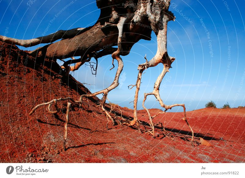 Dry earth Red Tree Aspire Gomera Canaries Vacation & Travel Search Drought Growth Desert Earth Sand Water Thirst Blue Root Death Nature stretch Loneliness