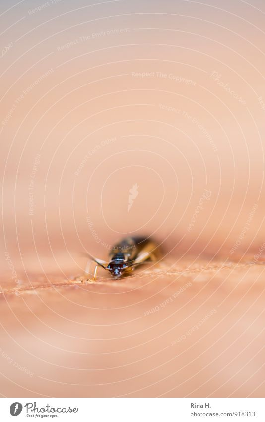 Animal Wait Insect Crawl Beetle Feeler Frontal