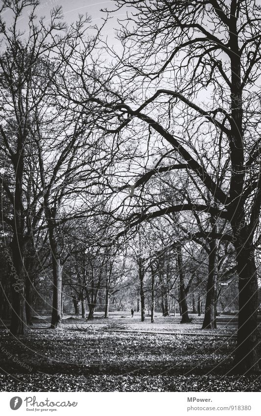autumn Environment Nature Autumn Plant Tree Park Forest Thorny Gloomy Dry Many Change Earth Leaf Branch Bleak Spooky Gray Black & white photo Exterior shot Day