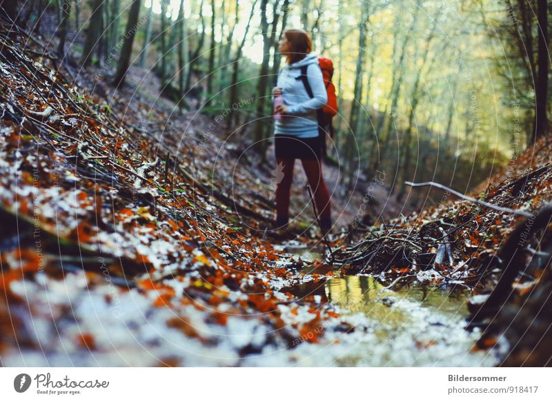. Trip Hiking Feminine Young woman Youth (Young adults) Woman Adults 1 Human being 18 - 30 years Nature Landscape Plant Water Autumn Tree Leaf Forest Brook