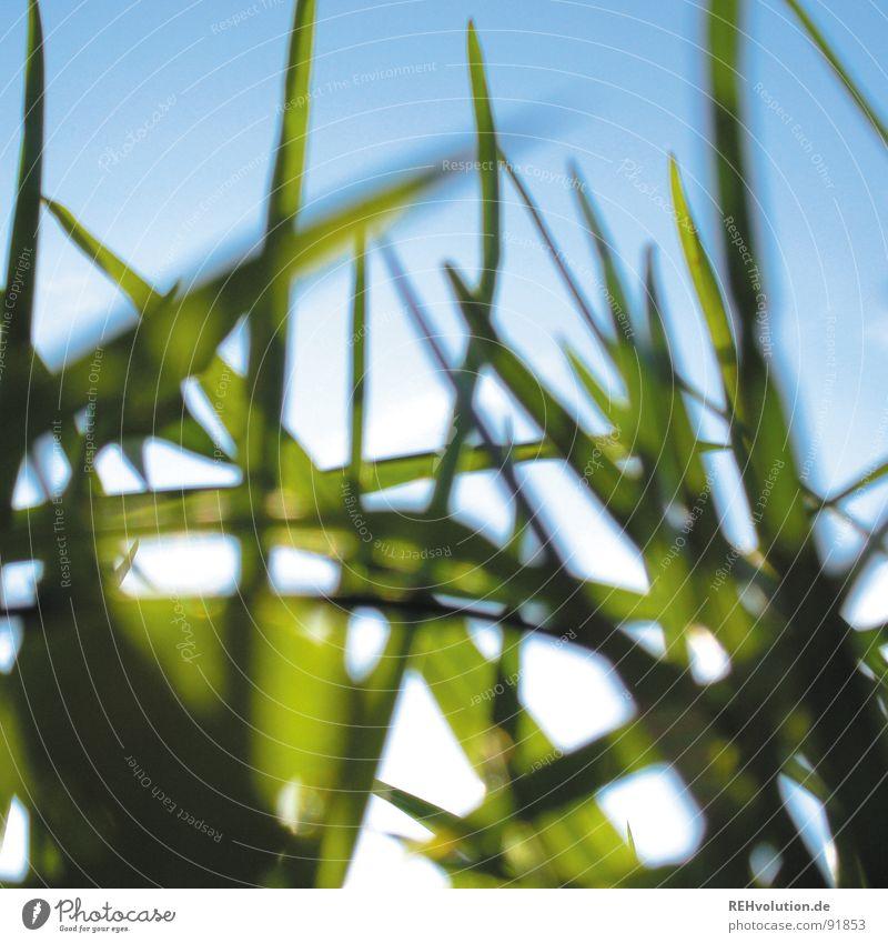 Sky Blue Green Summer Sun Meadow Grass Lighting Lie Fresh Blade of grass Juicy
