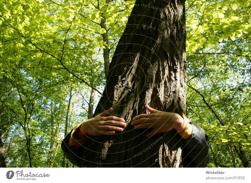 Nature Hand Tree Summer Joy Forest Relaxation Spring Friendship Earth Power Energy industry Fingers Success Search Good