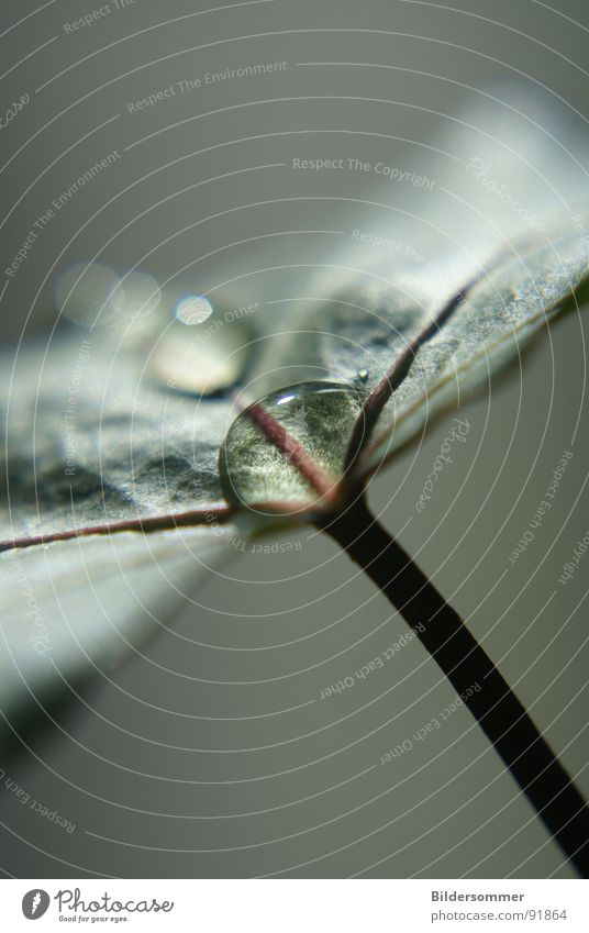Nature Water Green Leaf Drops of water Rope Dew Macro (Extreme close-up)