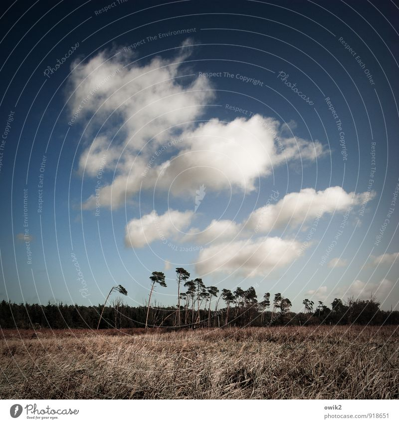 Sky Nature Plant Blue Tree Landscape Clouds Forest Environment Horizon Weather Growth Stand Bushes Tall Climate
