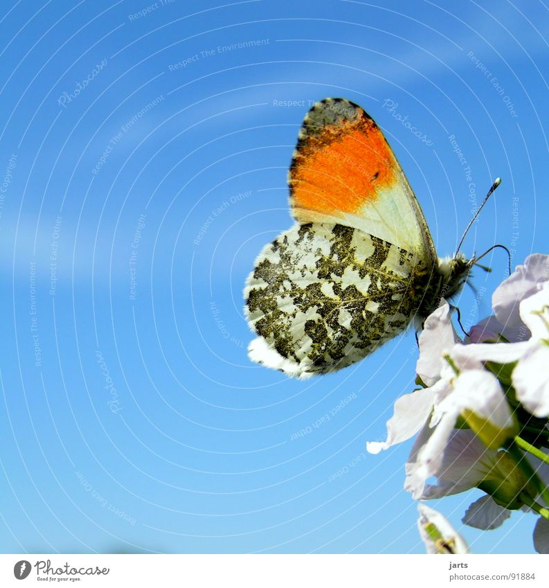 Nature Beautiful Sky Flower Blue Summer Meadow Blossom Freedom Wing Butterfly