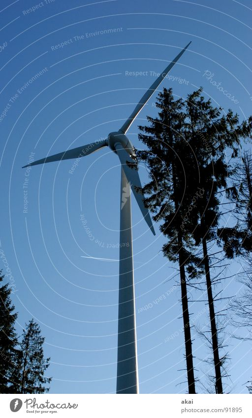 Wind power at Roßkopf 5 Sky Coniferous trees Forest Sky blue Geometry Deciduous tree Perspective Coniferous forest Glade Paradise Clearing Wind energy plant