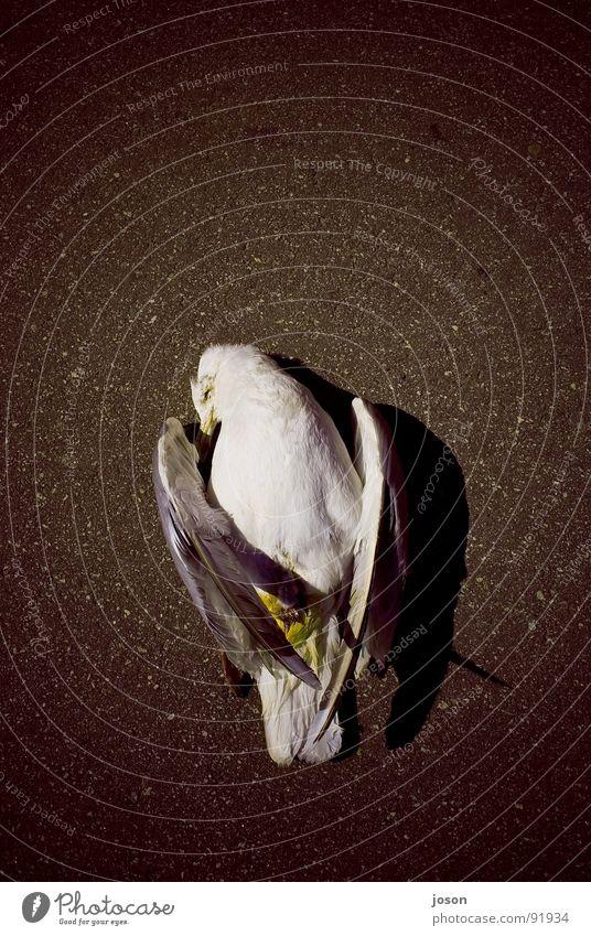 Ocean Death Bird Wing Asphalt Seagull Wismar