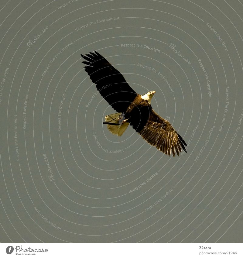 Animal Air Bird Germany Flying Large Elegant Tall Free Aviation Feather Might Wing USA Living thing Strong