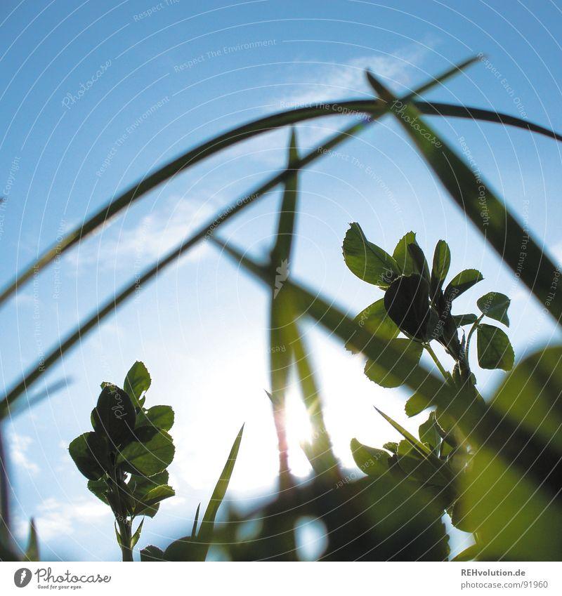 Sky Sun Green Blue Summer Meadow Grass Lighting Fresh Lie Blade of grass Juicy