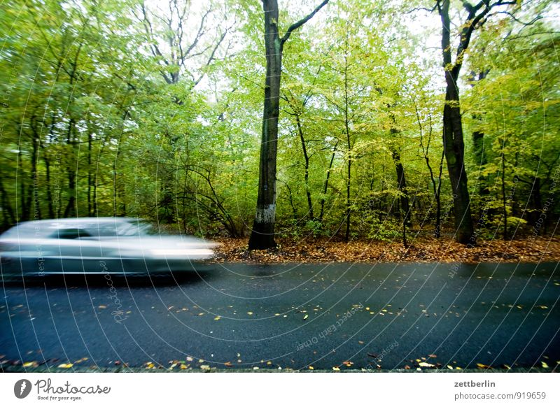 three thousand six hundred and one Autumn Forest Deciduous forest Street Road traffic Speed Haste Date Car Motor vehicle Slippery surface auquaplaning Threat