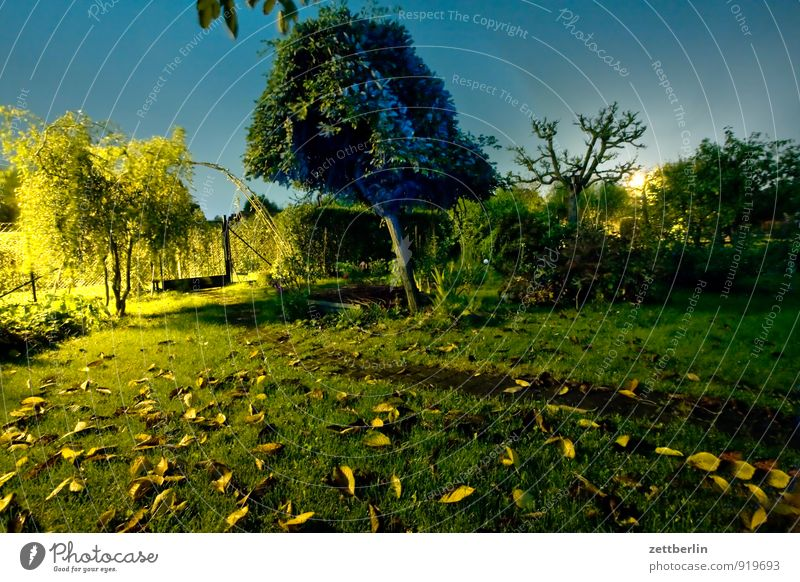 In the evening in the garden without Garden Autumn Garden plot Evening Night Dark Light Lantern Street lighting Lawn Grass Leaf Tree Mysterious Crime scene