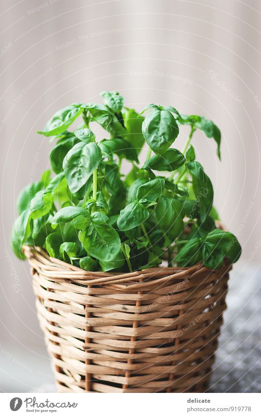 basil Food Herbs and spices Basil Herb garden Plant Nutrition Organic produce Vegetarian diet Italian Food Foliage plant Blossoming Fragrance Eating Kitchen