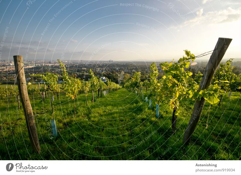 between the wine Environment Nature Landscape Plant Air Sky Horizon Sun Autumn Weather Beautiful weather Bushes Agricultural crop Hill Vienna Austria