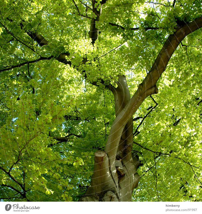 Nature Tree Green Leaf Spring Garden Park Landscape Branch Tree trunk Treetop Share Twig Horticulture Tree structure