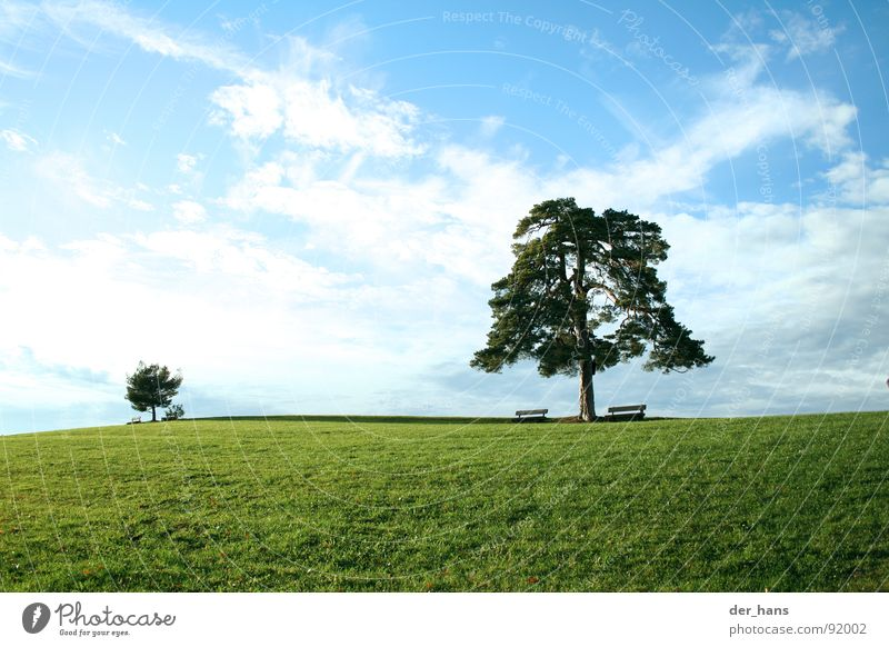The difference in size Tree Meadow Summer Landscape Blue sky Nature Consistent