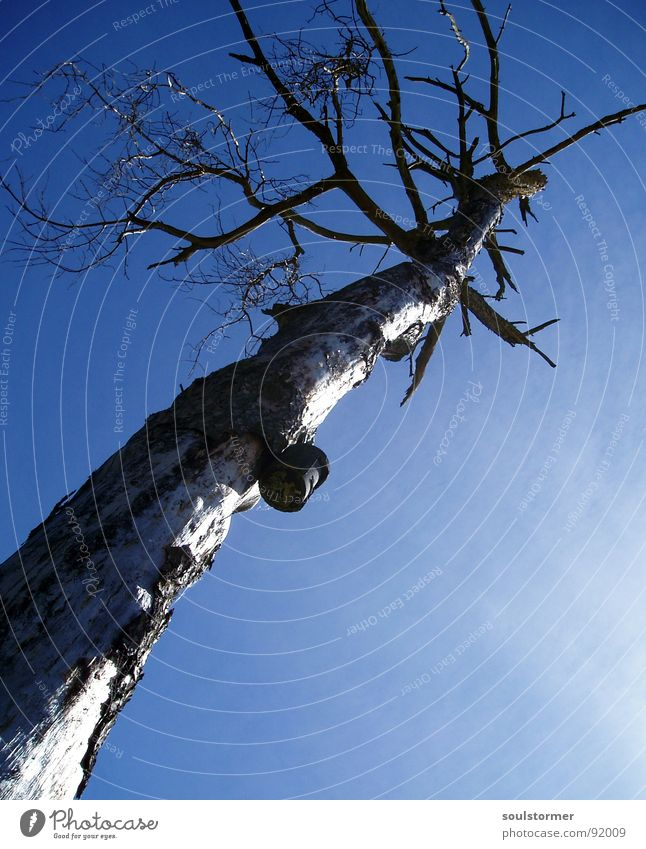 Straight into the Sky Tree Clouds Birdhouse Wide angle Loneliness Death Branch Crazy Upward End Old