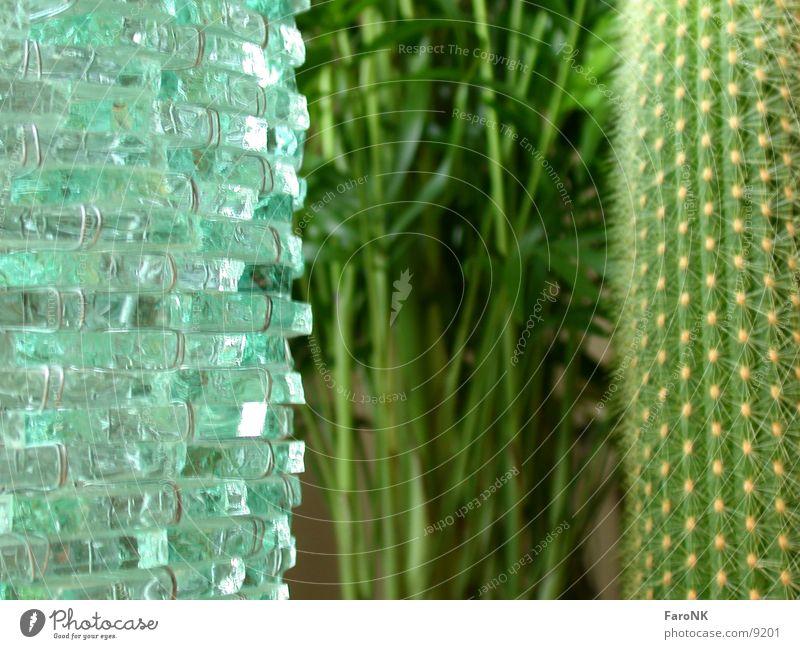 Three Plant Palm tree Cactus Macro (Extreme close-up) Close-up Glass