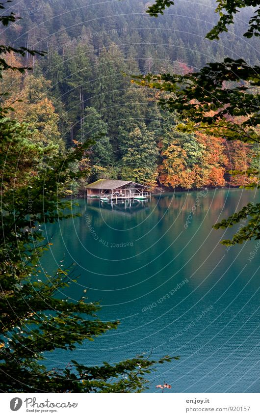 Nature Vacation & Travel Green Relaxation Loneliness Landscape Calm Forest Autumn Lake Weather Leisure and hobbies Orange Idyll Tourism Climate