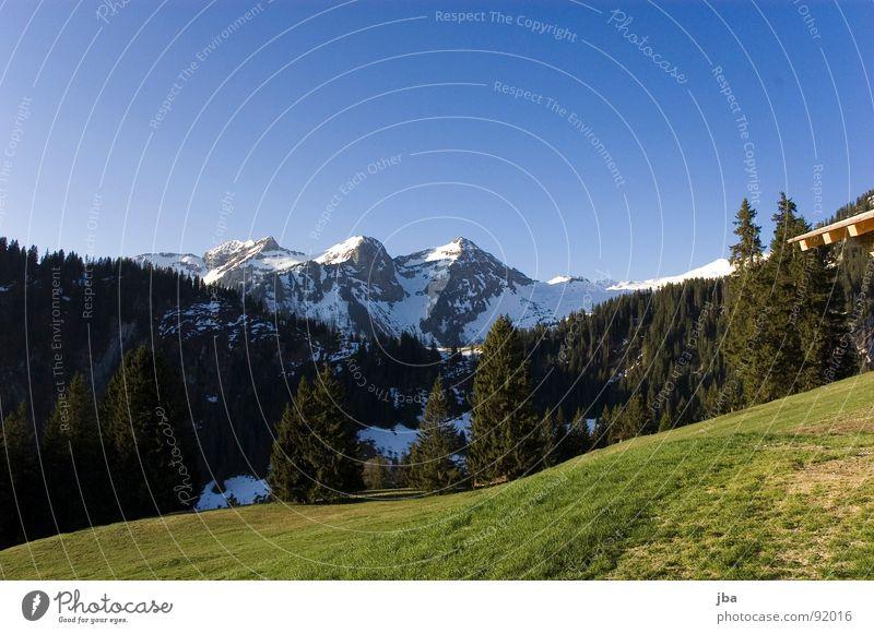 Sky Blue Beautiful Forest Mountain Spring Meadow Grass Snow Authentic Pasture Switzerland Fir tree Slope Alpine pasture Ski run