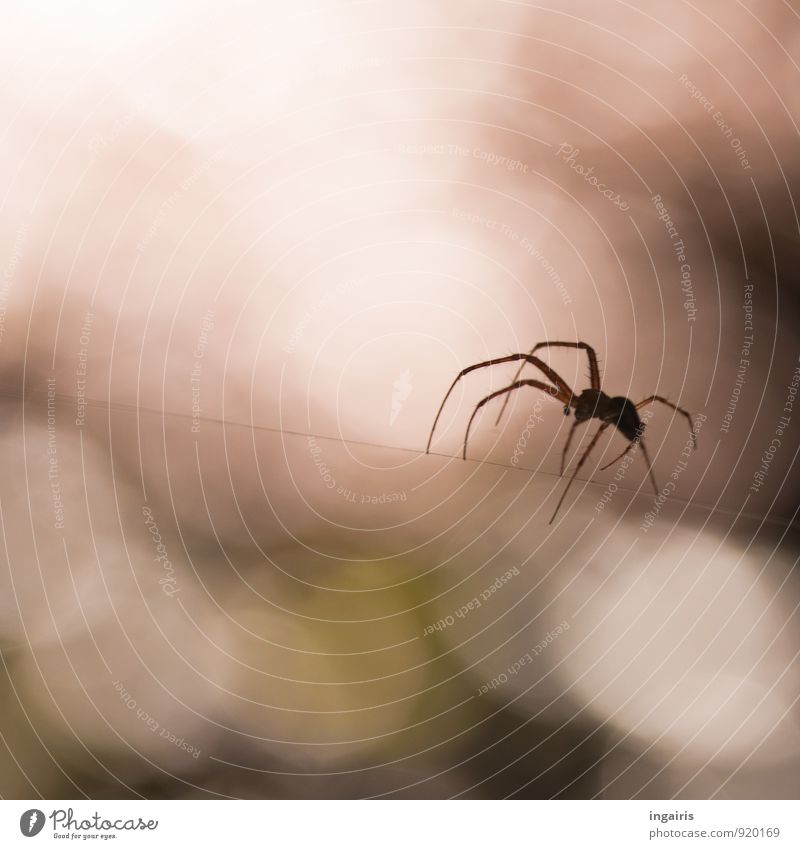 act of rope Environment Sunlight Animal Spider 1 Work and employment Crouch Hunting Sit Wait Esthetic Brown Green Moody Spider's web Spider legs Spin Blur