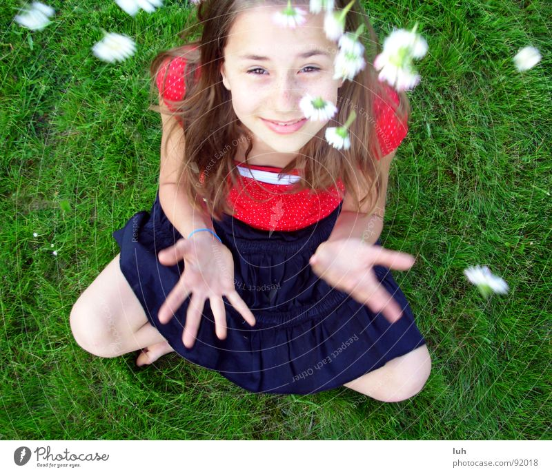 Summer rain. 2 Daisy Green Grass Flower Red White Spring Jump Happiness Healthy Rain Child Youth (Young adults) Fairy tale Fantastic Girl Lawn flowers Free Skin