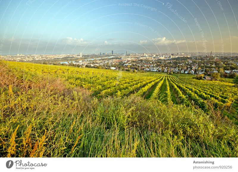 Wine before Vienna Environment Nature Landscape Plant Sky Clouds Horizon Autumn Weather Beautiful weather Grass Bushes Agricultural crop Meadow Field Hill