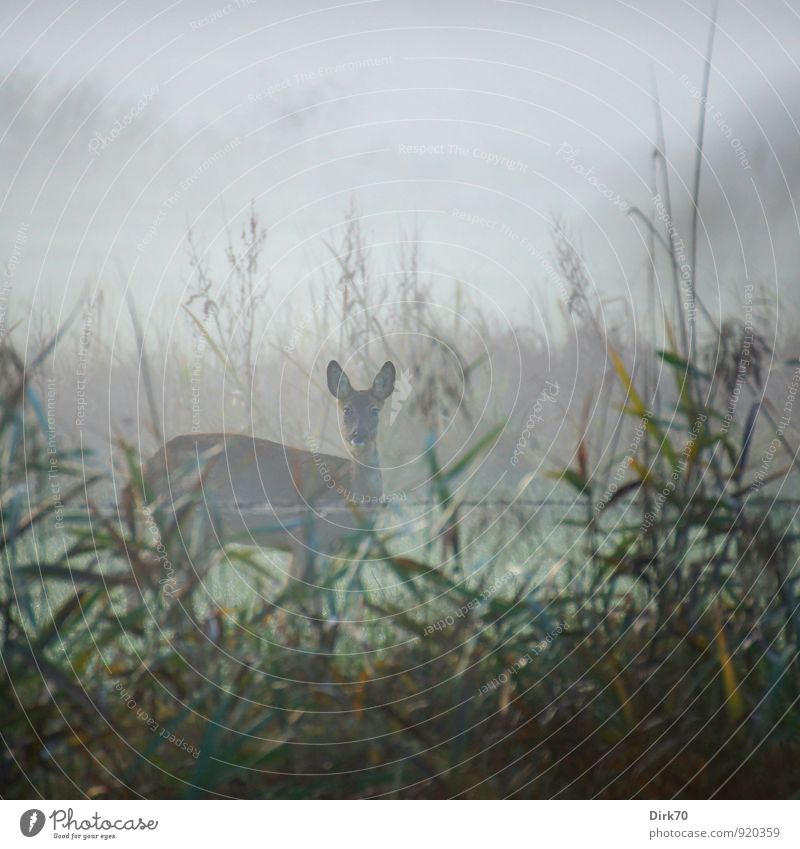 Nature Green Tree Animal Autumn Meadow Feminine Grass Gray Brown Weather Field Fear Fog Wild animal Bushes