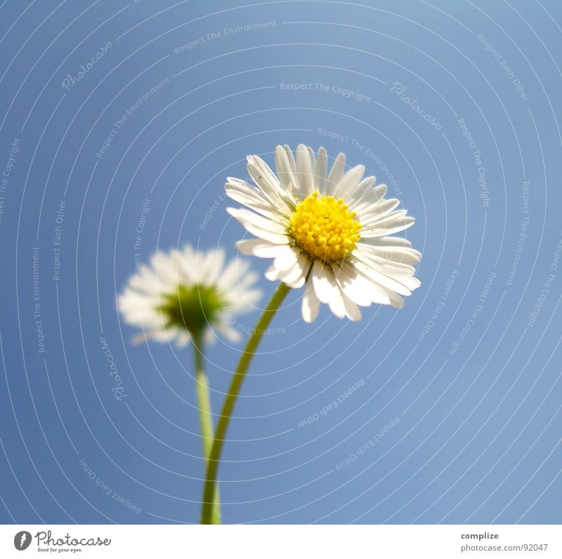 Sky Nature Plant Blue Beautiful Summer White Flower Loneliness Yellow Spring Natural 2 Growth Authentic Grief