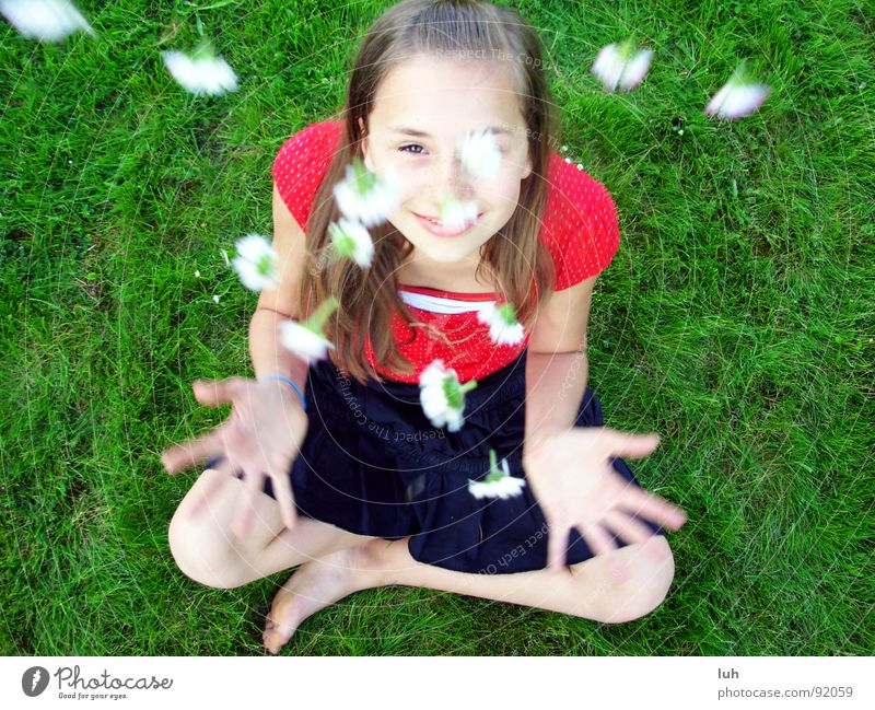 Summer rain. 3 Daisy Green Grass Flower Multicoloured Spring Sweet White Jump Red Black Happiness Healthy Fairy tale Fantastic Child Youth (Young adults) Girl