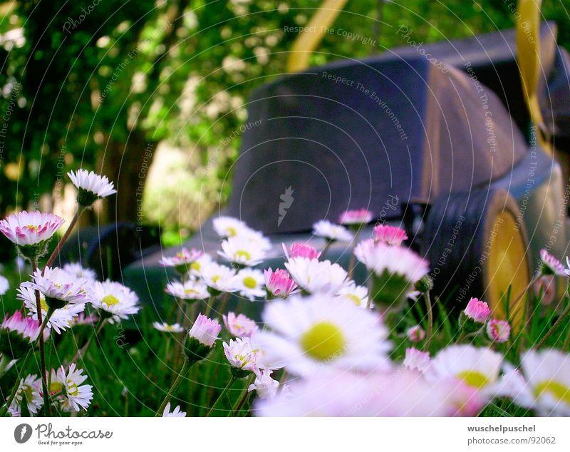 NO INCOME. Lawnmower Daisy Green Yellow White Spring Garden Fear Exterior shot