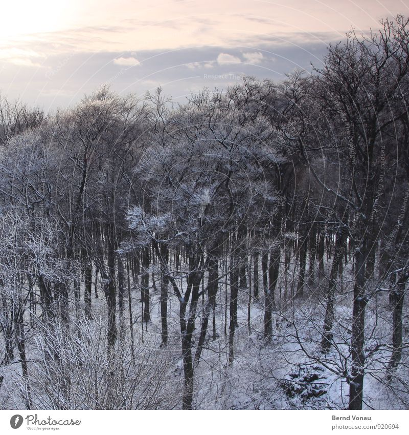 Sky Nature Blue Beautiful White Sun Landscape Calm Clouds Winter Forest Cold Snow Gray Above Weather