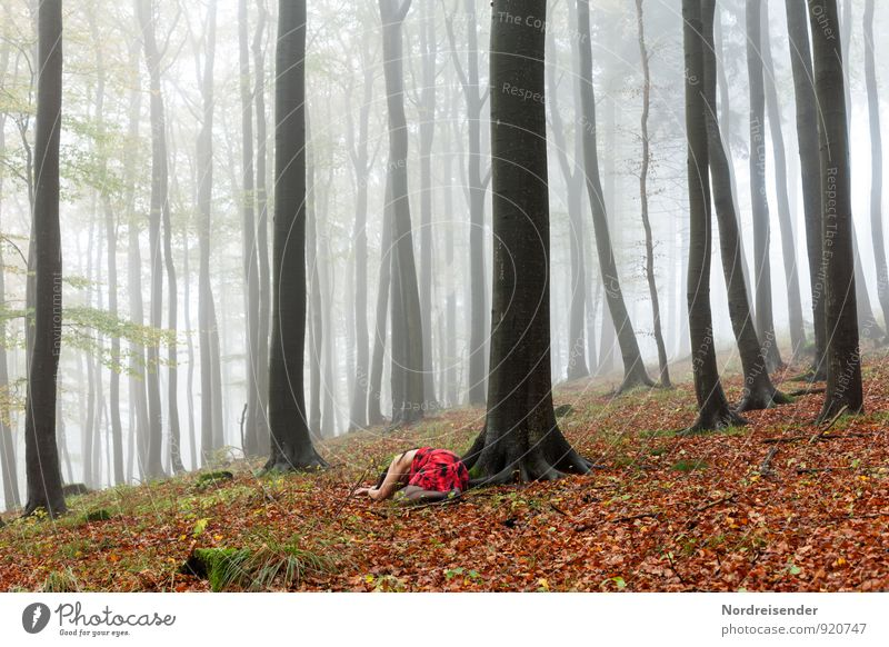 Little Red Riding Hood..... Trip Human being Feminine Woman Adults Nature Landscape Elements Climate Weather Bad weather Fog Rain Tree Forest Dress Lie Sadness
